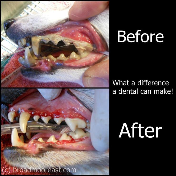 dental before after
